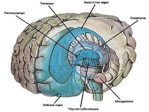 Диагностика головного мозга на наличие болезни