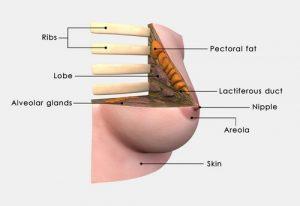 Операция при раке молочной железы в Израиле